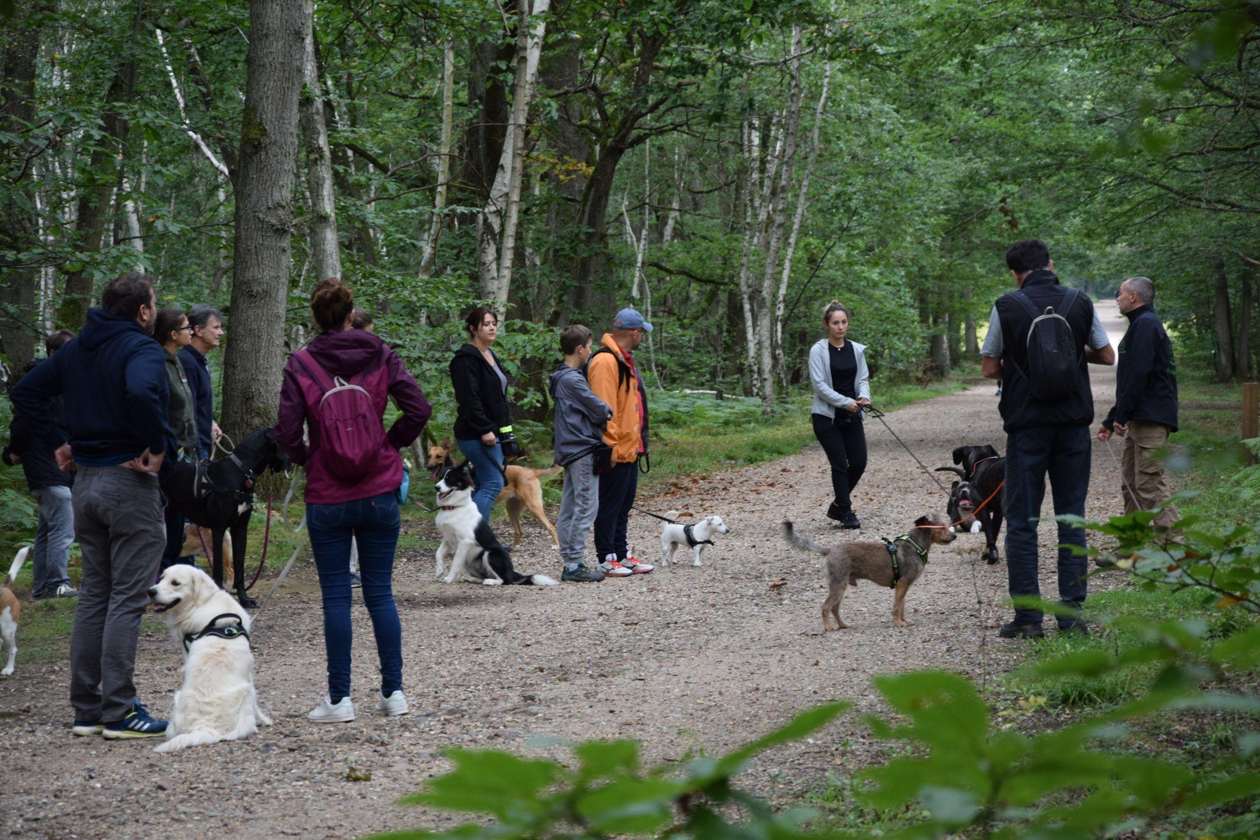 Stage intensif education canine île-de-france Jouars-pontchartrain Yvelines 78 Alexis bonnarang Educhien78 club canin de la plaine de jouars